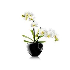 Orkidepotte black