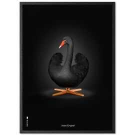 Sort svane på sort baggrund 50 x 70 cm med ramme