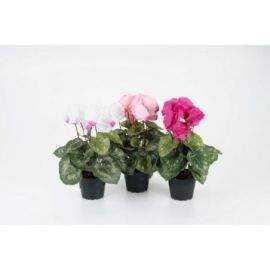 Cyklamen 32 cm mix blomster