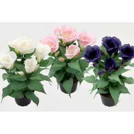 Potteplanter Rose mix 30 cm